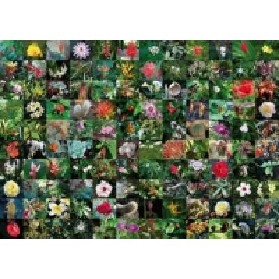 Пазл Коллекция цветов  (1000 элементов)