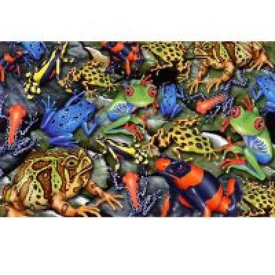 Пазл Лягушки (1000 элементов)