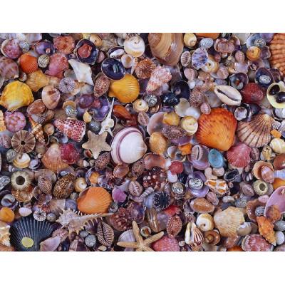 Пазл Морские ракушки  (1000 элементов)